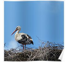 Stork in the Nest Poster