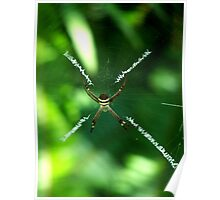 ~ St Andrews Cross ~ Spider ~ Poster