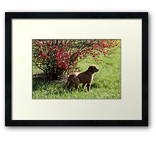Jimmy- So Much To Do So Little Time To Play -10 Framed Print