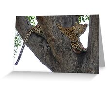 Leopard protecting her kill Greeting Card