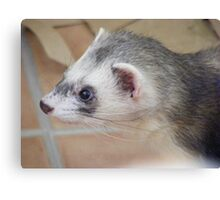 Georgie ferret - look at those whiskers! Canvas Print