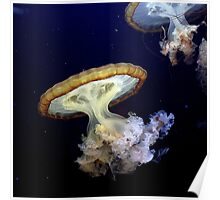 Invasion of the Japanese Sea Nettles Poster