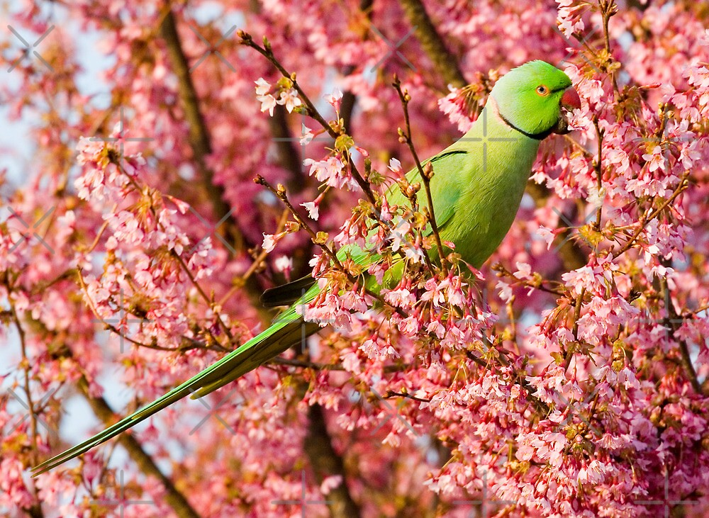 Springtime Feeding by Geoff Carpenter