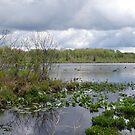 Lake Kelso by Monnie Ryan