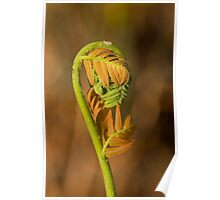 Two Tone Fern Poster