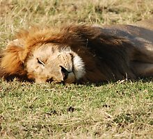 Lazy days by CriscoPhotos