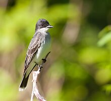King Of The Eastern Birds by EugeJ