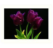 Purple on black Art Print