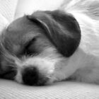 Sleepy Puppy by Dave Lechko