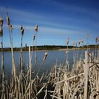 Chevington Reedbeds - Druridge Bay Northumberland by Moonlake