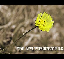 You are the only one... by Bevin Allison