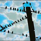 Birds On Wire by LaFleureRouge1