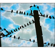 Birds On Wire Photographic Print
