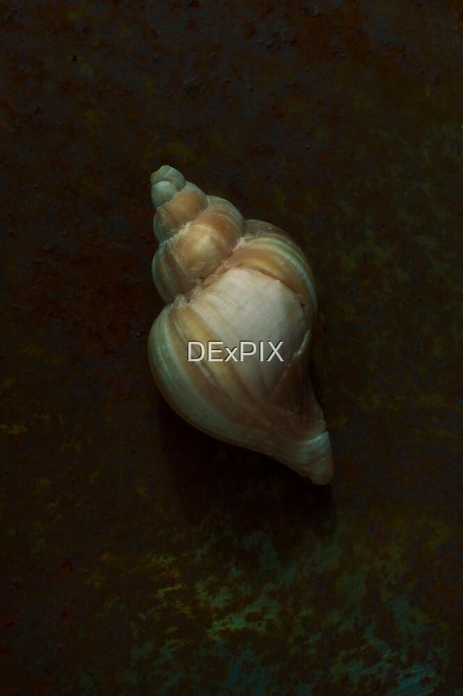 Rusty Shell by DExPIX