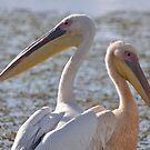 Pelicans by Angela1