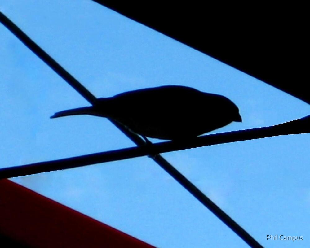 Bird on a wire by Phil Campus