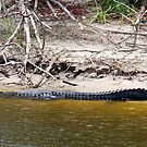 Al - E - Gator by Shawnuffdigital