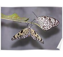 Tree Nymphs Poster