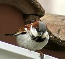 Shhh ... I am moving in; Nest building after the rain, La Mirada Villages, CA, USA by leih2008