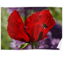 Poppy and Bumble Bee Poster