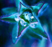found water in a star by ser-y-star