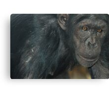 Chimp Eyes Canvas Print