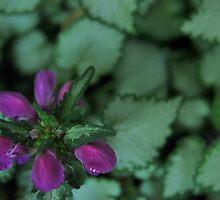 Purple Flower, Silver Leaves - Rancho Cucamonga, CA by Liz Ware