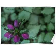 Purple Flower, Silver Leaves - Rancho Cucamonga, CA Poster
