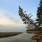Dawn light with tree, Lake Superior, Ontario by Eros Fiacconi (Sooboy)