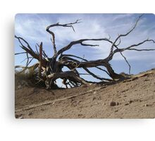 Whiskey Bay -Wilsons Promontory Canvas Print