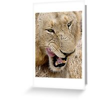 Male Lion Close Up Greeting Card