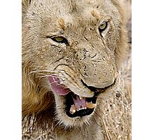 Male Lion Close Up Photographic Print