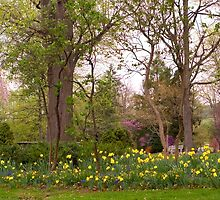 Daffodil Garden In The Park by Gene Walls