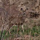 Oh Deer! by Barb Miller