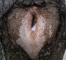 A Generic Tree Heart by Erika Townsley