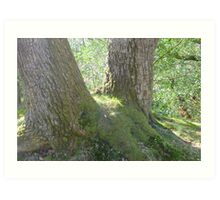 Dalkeith Park: Oak and Moss Art Print