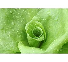 Rainy day Lettuce Photographic Print
