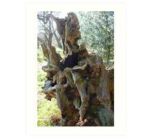 Dalkeith Park: Oak Shell Art Print