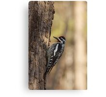 Woodpecker waiting to peck Canvas Print