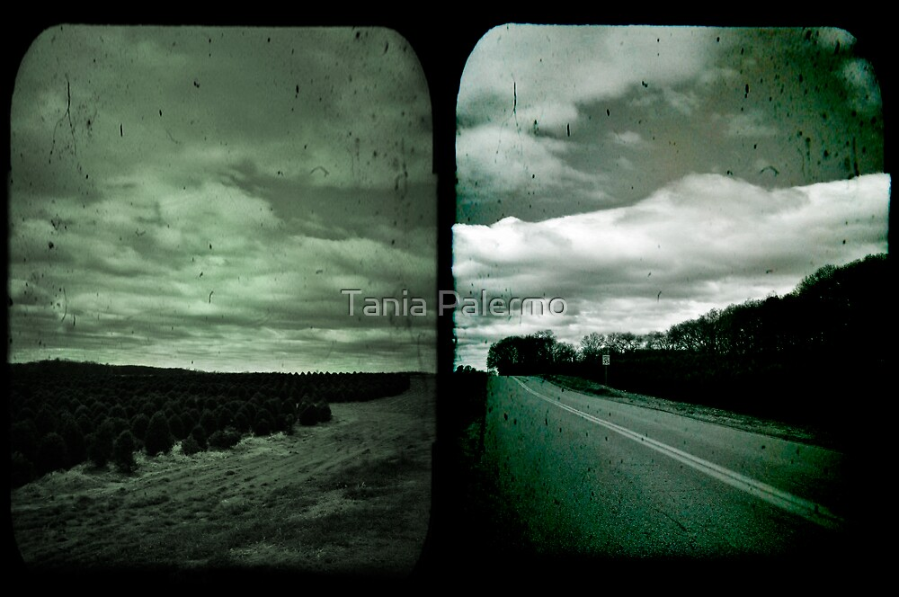 not all who wander are lost by Tania Palermo