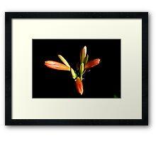 Oranje flower 6168 Framed Print