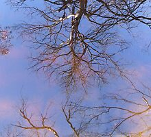 Fake clouds under the reflection by gnarlyart