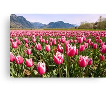 Tulip Farm Canvas Print