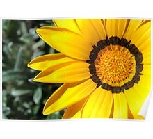 Yellow flower 6214 Poster