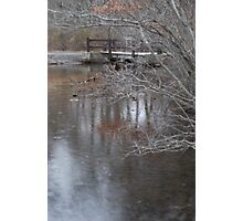 Hiding in the brush - Bethpage Park Photographic Print
