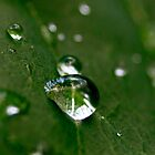 Water On Rose Leaf by photodork