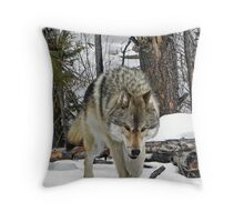 Wolf glare Throw Pillow