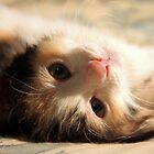 I know you want me .. I iz so cute ? by meowiyer