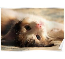 I know you want me .. I iz so cute ? Poster