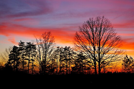 Sunset Silhouette by Lauren Neely